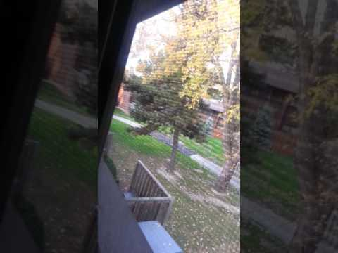 Nasty neighbours 1st rant session