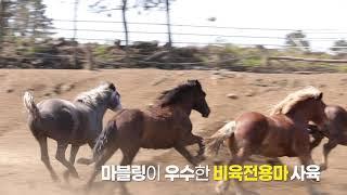 몬트락 말고기 소개 영상