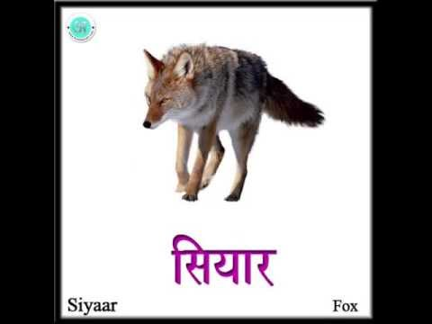 Wild animals photos with names in hindi