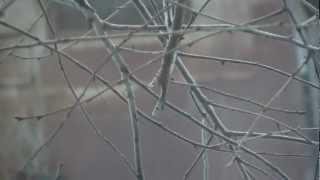 Тест фотокамеры Canon EOS 50D на видео(, 2012-12-16T08:05:29.000Z)