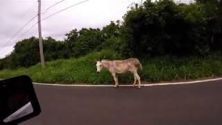 USVI St. Croix Horse or Donkey?