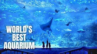 SEA Aquarium Singapore Walking…