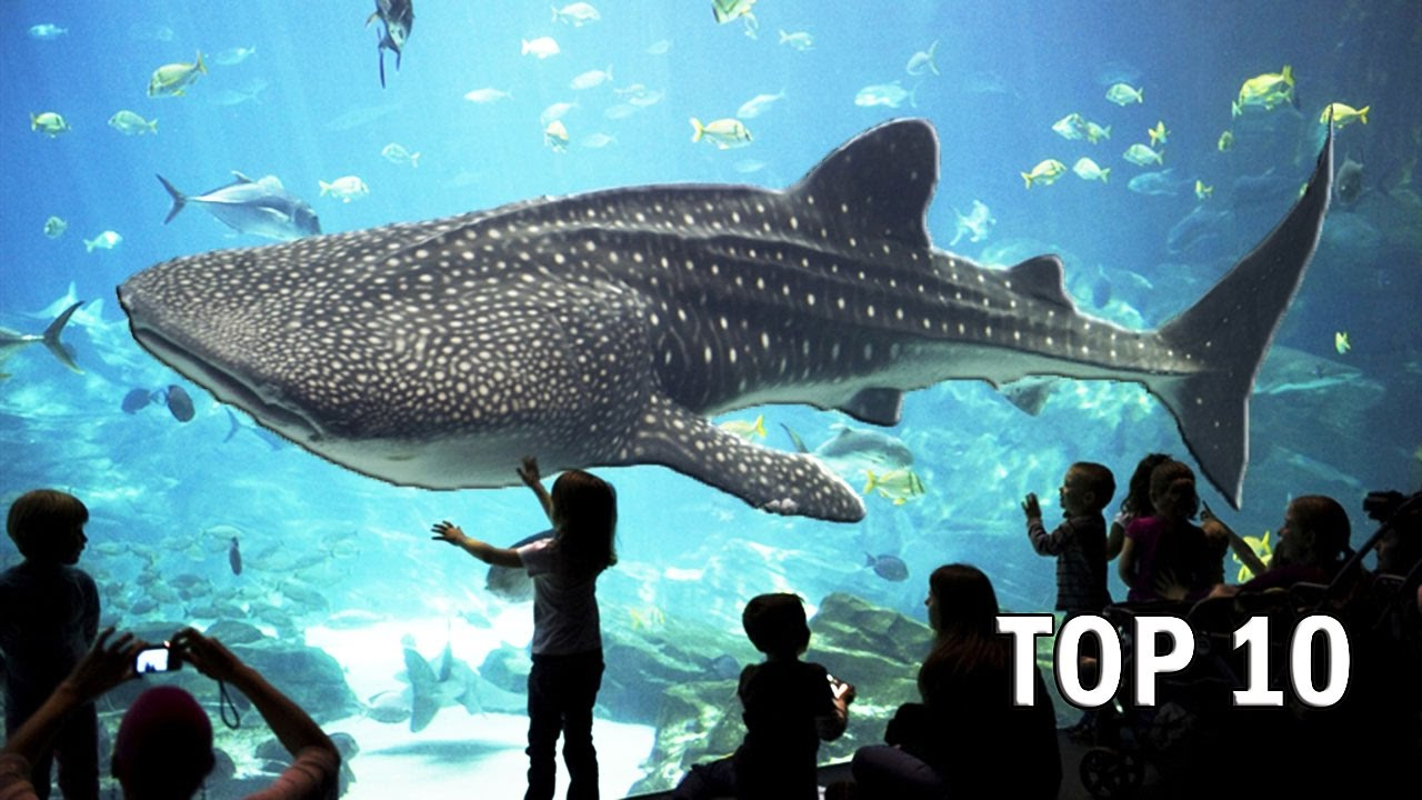 Top 10 Largest Aquariums in the World - YouTube