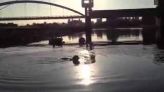 アイリッシュウルフハウンド のマーシャ君、川を見て泳いじゃった(ーー;)