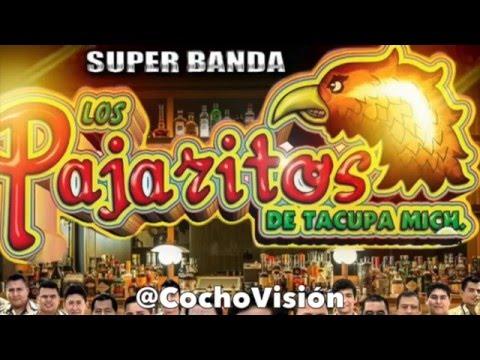 El Cocho Y El Guache   Los Pajaritos De Tacupa Michoacan
