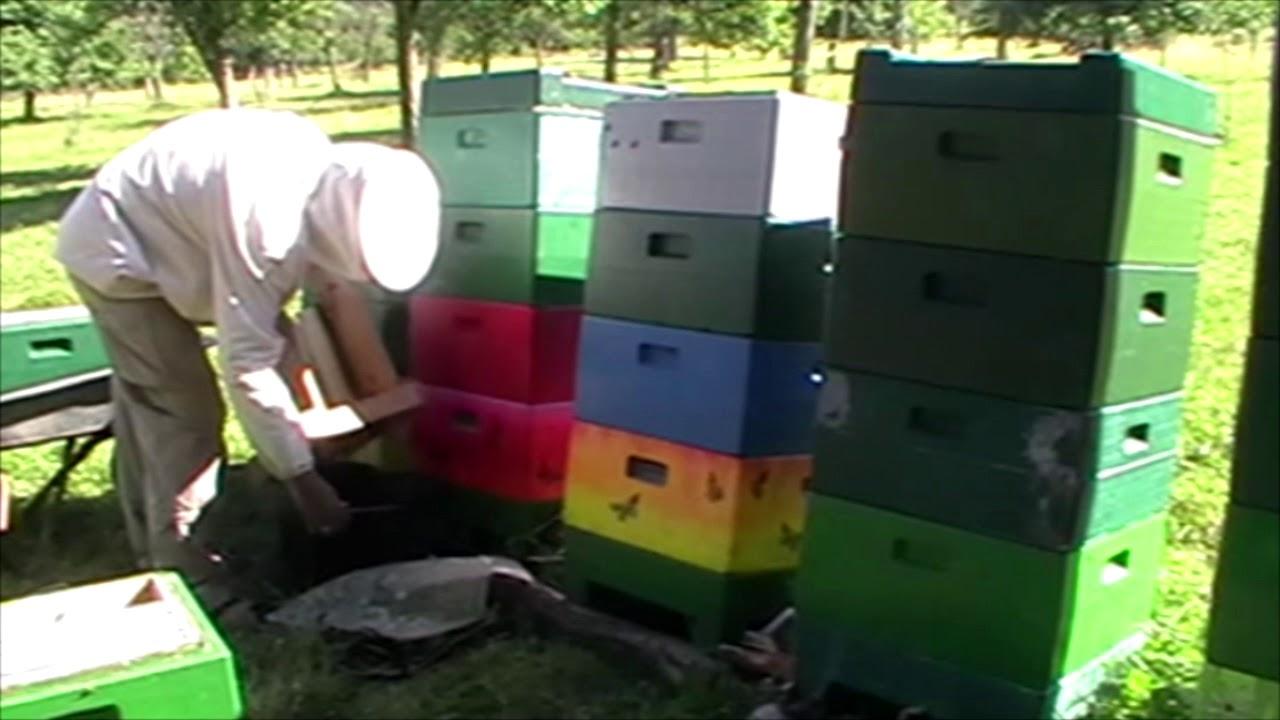 Знакомство С Пчеловодом Германии