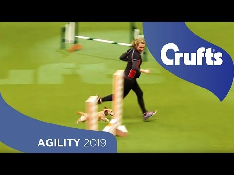 Agility - Kennel Club Novice Cup Final - Small - Agility | Crufts 2019