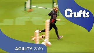 Agility - Kennel Club Novice Cup Final - Small - Agility   Crufts 2019