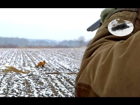 Fuchsjagd mit Dackel - Baujagd Fox hunting Polowanie na lisy z norowcem Chasse au renard Rävjakt