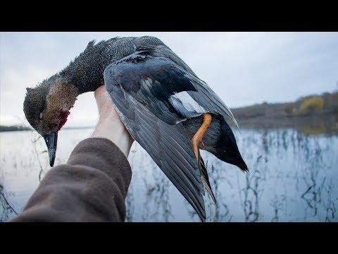 Early Season Public Land Ducks   Kayak Duck Hunting