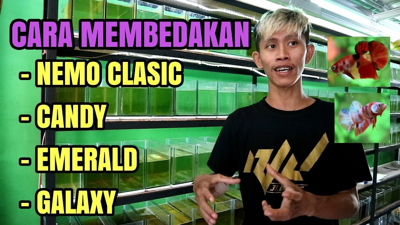 Perbedaan Nemo Candy Galaxy Dan Emerald Youtube