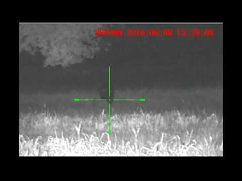 Sightmark Photon XT - Big Hog Hunt