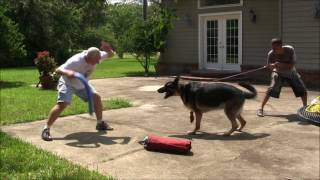 How to Turn a Fearful dog into a Protection Dog