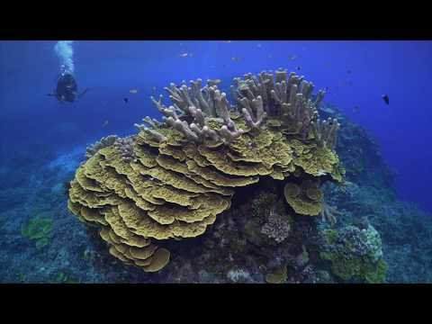 Diving Solomon Islands