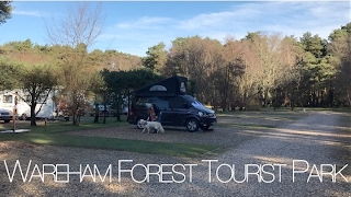Wareham Forest Tourist Park - VW California T6
