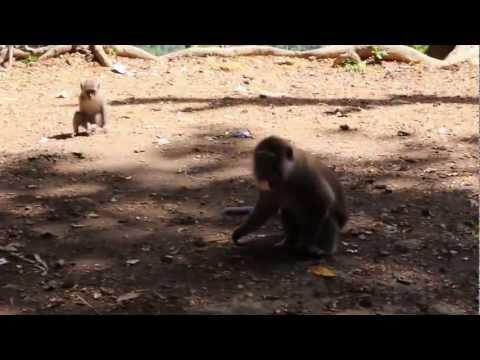 Apies kijken/ Monkey time at  Monkey Forest, Lombok