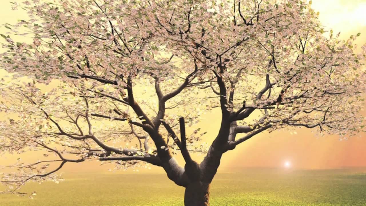 Free Guided Meditation Video, Let Go, Let God
