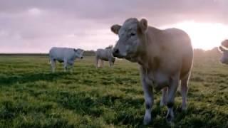 Jim Block | Hier kommt unser Fleisch her...