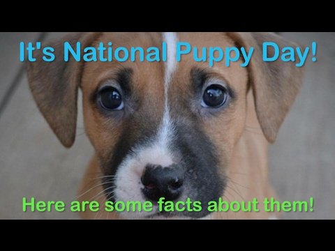 Fun facts about puppies on National Puppy Day 2017