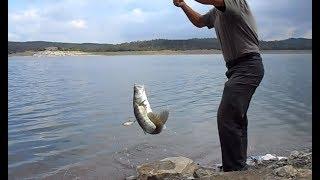 Ловим Рыбу на Снасть Убийца Судака. Рыбалка на ЖИВЦА. Спиннинг и Микроджиг на Щуку и Окуня