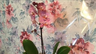 Дневник Орхидеи . Что Делать После Покупки ?