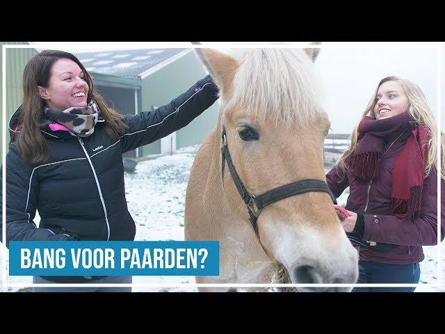 Bang voor paarden? Hoefwijzer helpt Amable!