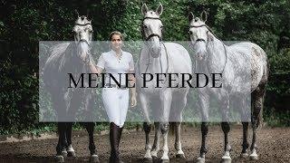 Meine sieben Pferde / Vorstellungsrunde