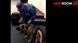 NEWSROOM24: Демонстрация навыков поисковой собаки в Нижнем Новгороде