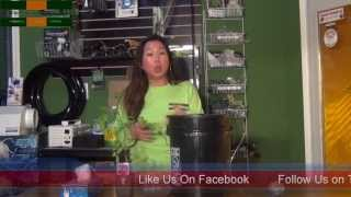 how to transplant a tomato plant into a dwc system the lazy sharecropper