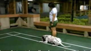 Waggie Obedience Classes - Dog Training Singapore