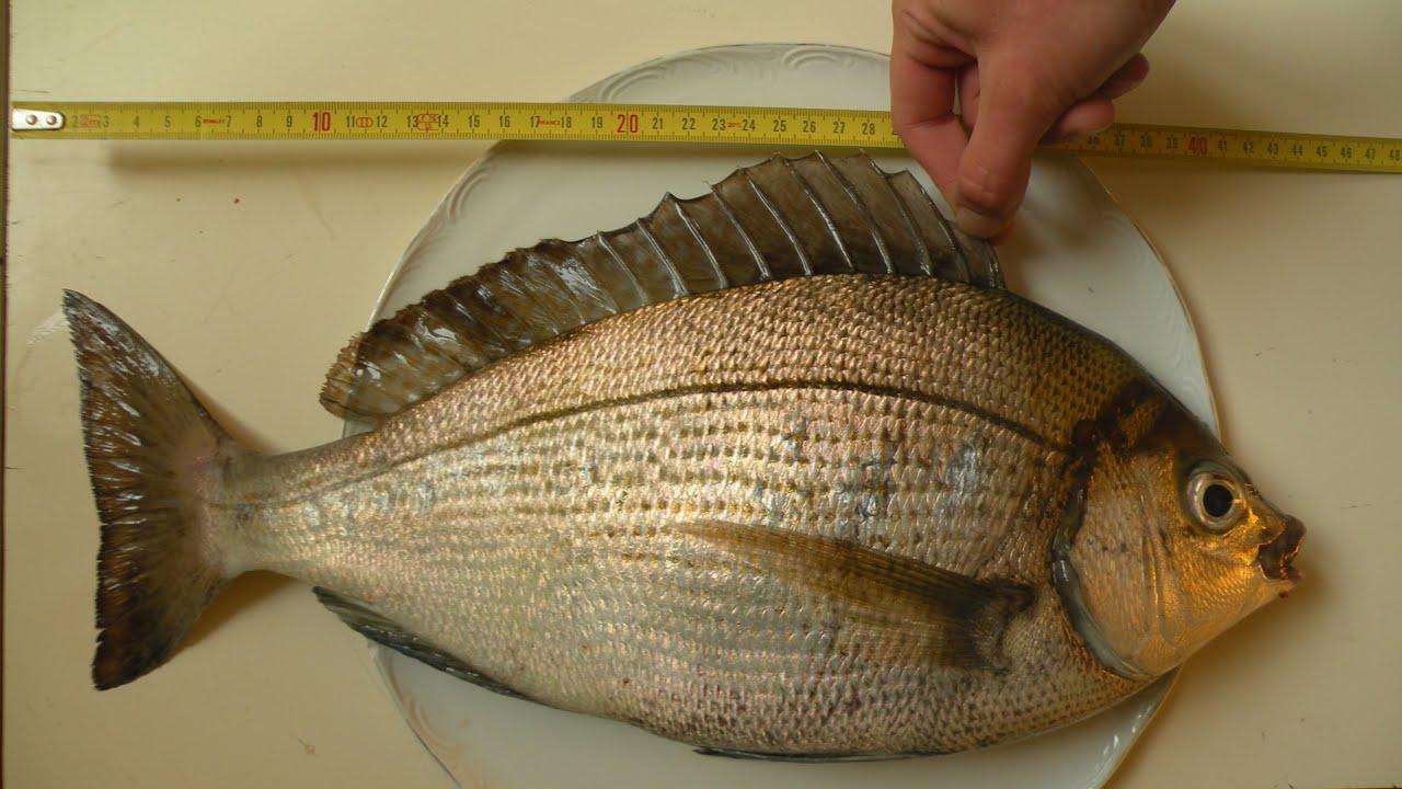 Les codes pour la pêche dhiver
