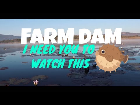Fishing A Farm Dam For The FIRST Time EVER!