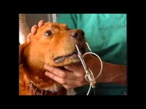 people helping animals without voices! ANIMAL ABUSE PEOPLE HELPING ...
