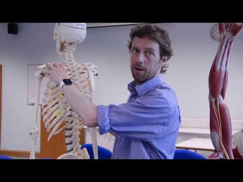 Shoulder girdle bones