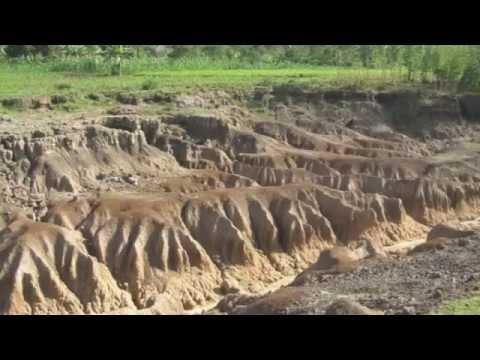 Deforestation: Here and Around the World