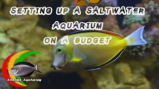 How To Setup a Saltwater Aquarium On a Budget