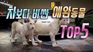 세계에서 가장 비싼 애완동물 TOP5