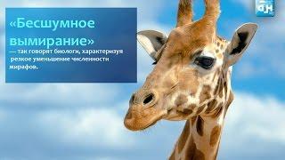 Все большее количество видов животных оказывается на грани исчезновения