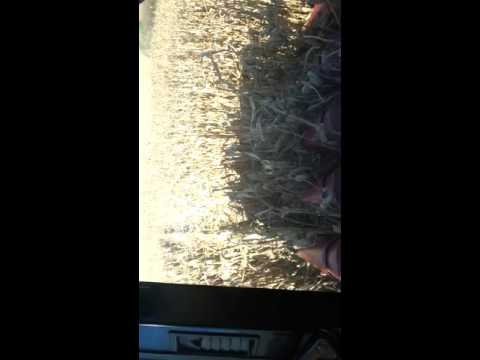 Farming in iowa out near dixon iowa