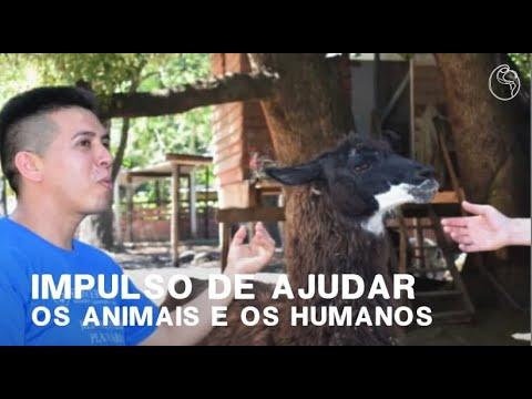 La experiencia de ayudar a los animales y los seres humanos | Un corazón sincero es ...