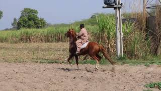 Horse riding Pakistan Gujarat