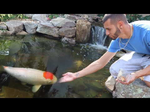 Surprising best friend with DREAM KOI!! **Beautiful**