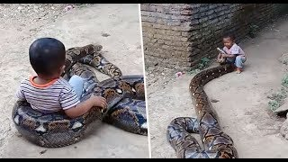 Toddler filmed playing around with a huge python YouTube