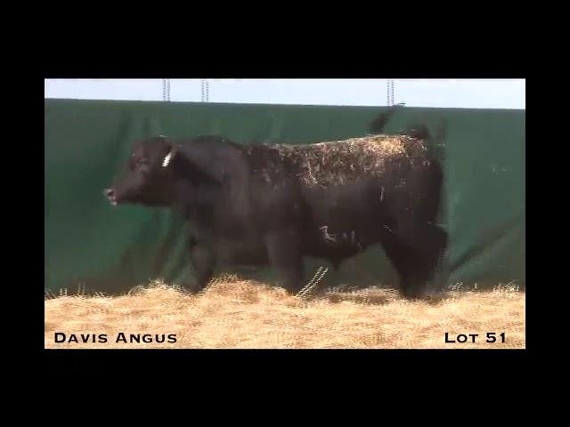 Davis Angus Lot 51