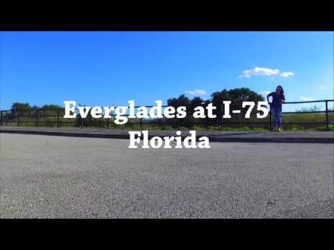 DJI Phantom 3 Standard - Alligator at Everglades I-75 South Florida