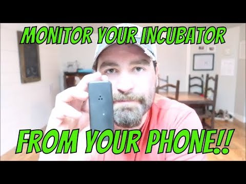 Monitor Your Incubator From Your PHONE!!