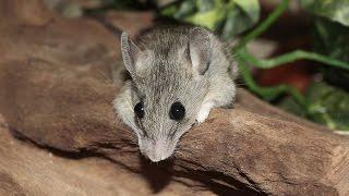 Как ловить и избавиться от мышей раз и навсегда расскажет урок