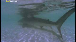 Shark VS Turtle