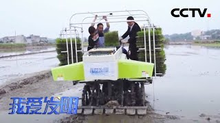 《我爱发明》 20200518 稻田抛秧手|CCTV农业