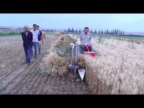 Reaper Binder Machine, FOB China Price 2500 Usd. Whatsapp: +8615690846795